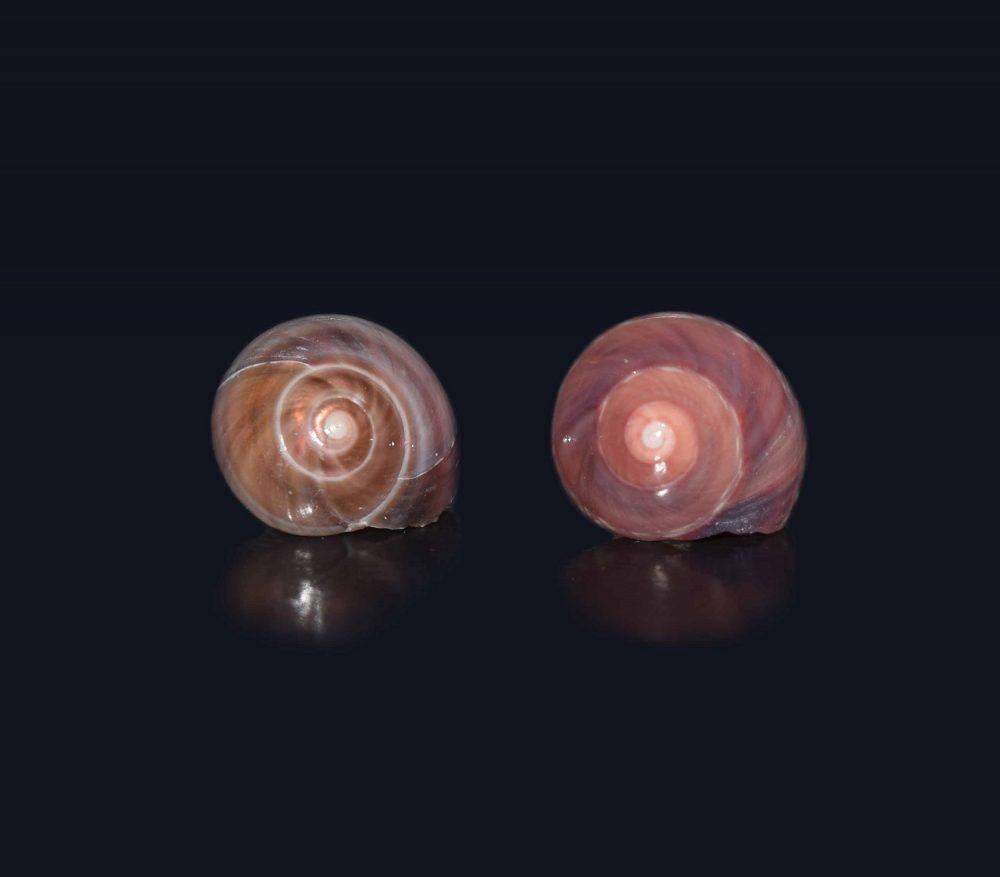 گوشواره صدفی اسپرت جینگیلی